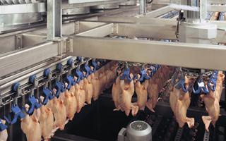 Marel Poultry kippenslachterij